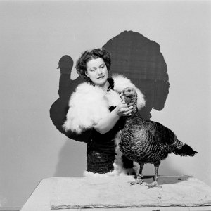 Barbara Orr Ehrhart and one of her turkeys.
