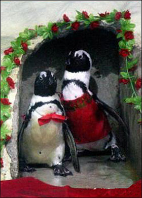 Penguins getting married.