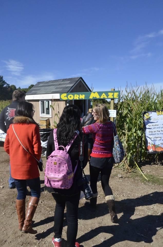 Corn Maze, Danvers