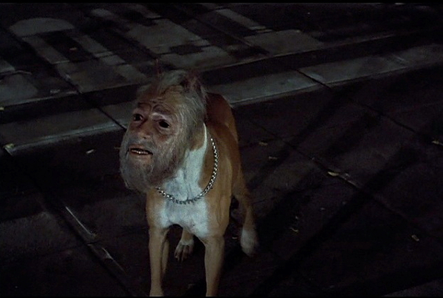 Man-faced dog - Jinmenken, Japanese urban legend