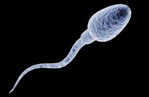 discovery-dot-com-sperm